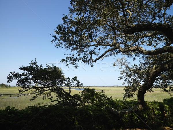 Tree at wetland. Stock photo © iofoto