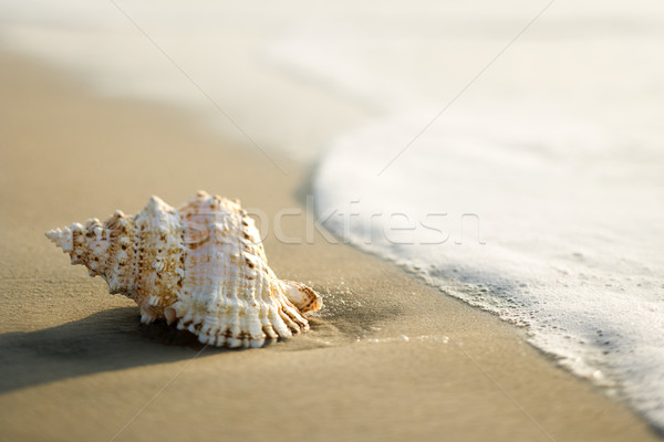 Shell plage vagues océan vague couleur Photo stock © iofoto
