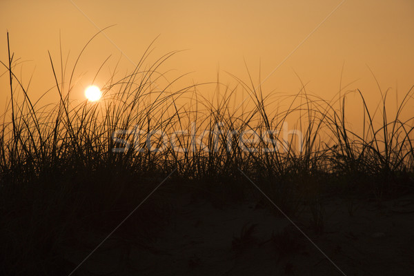 закат песчаная дюна песчаный пляж дюна лысые голову Сток-фото © iofoto