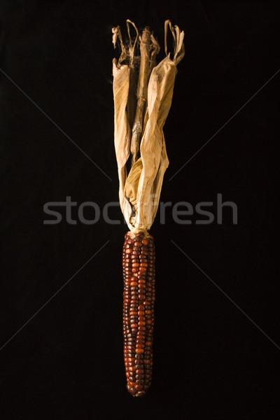Tarka indiai kukorica fül fekete szín Stock fotó © iofoto