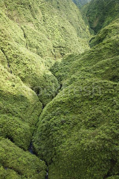 Maui Rainforest. Stock photo © iofoto