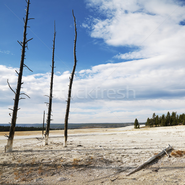 Yellowstone Park, Wyoming. Stock photo © iofoto