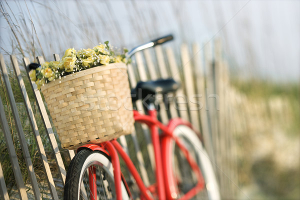 Bicycle with flowers. Stock photo © iofoto