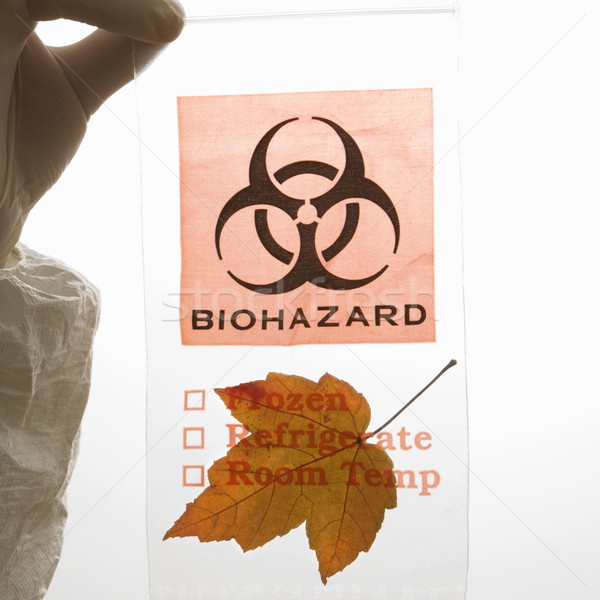 Leaf in biohazard bag. Stock photo © iofoto