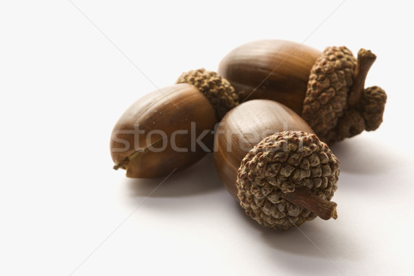 Still life of acorns. Stock photo © iofoto