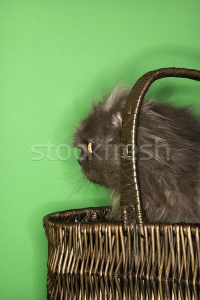 グレー ペルシャ猫 バスケット 座って 色 動物 ストックフォト © iofoto