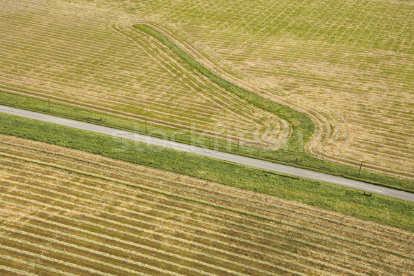 Cropland aerial. Stock photo © iofoto