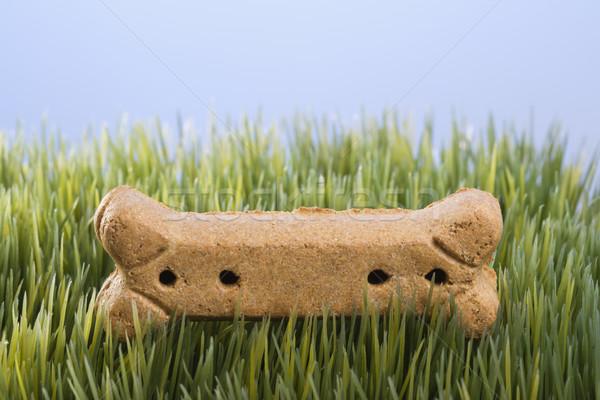 Kutya csemege fű stúdiófelvétel fektet Stock fotó © iofoto