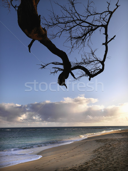 Maui Hawaii beach with branch Stock photo © iofoto