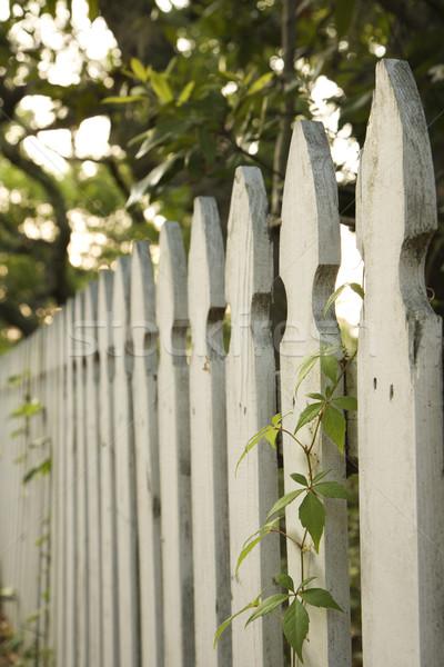 White picket fence. Stock photo © iofoto