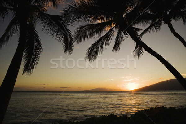 Tropical Hawaiian sunset. Stock photo © iofoto