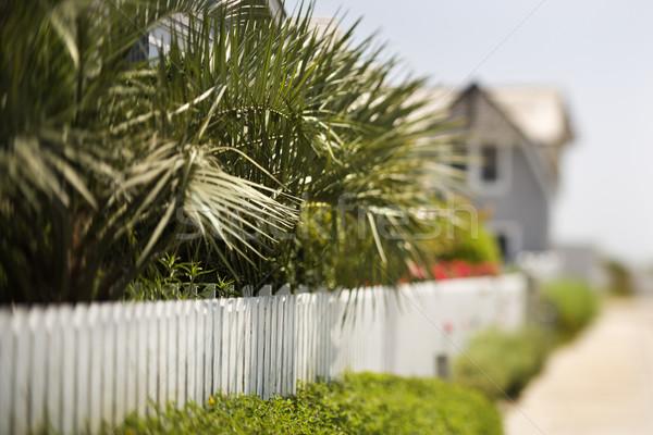 White picket fence with palms. Stock photo © iofoto