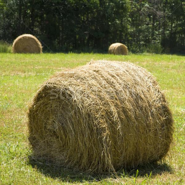 Hay bale on grass Stock photo © iofoto