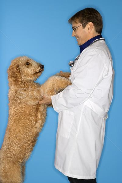 Vétérinaire chien Homme homme Photo stock © iofoto