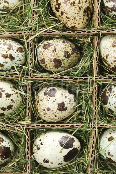 Speckled eggs. Stock photo © iofoto
