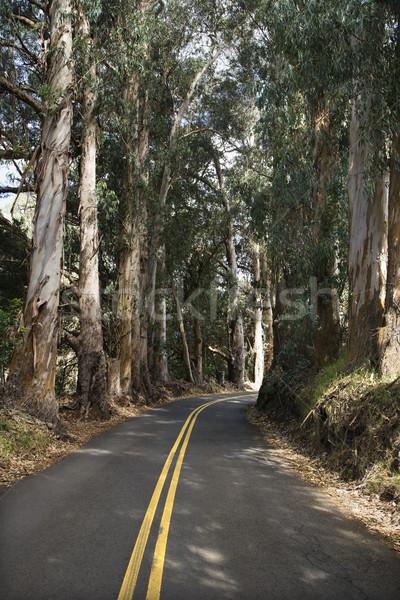 Scenic road. Stock photo © iofoto