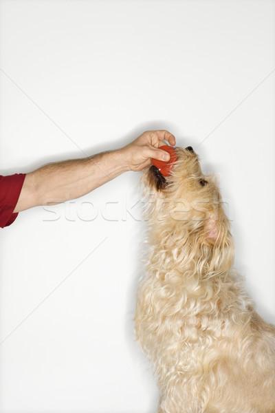 собака мяча человека пушистый коричневая собака Сток-фото © iofoto