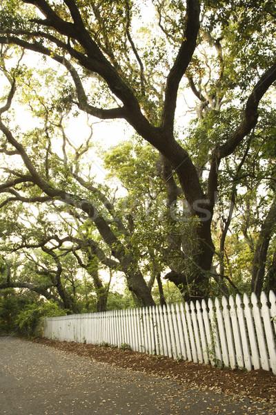 White picket fence with trees. Stock photo © iofoto