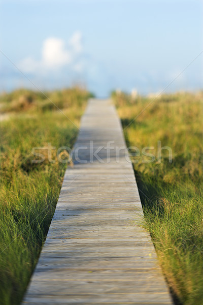 Wooden beach access walkway. Stock photo © iofoto