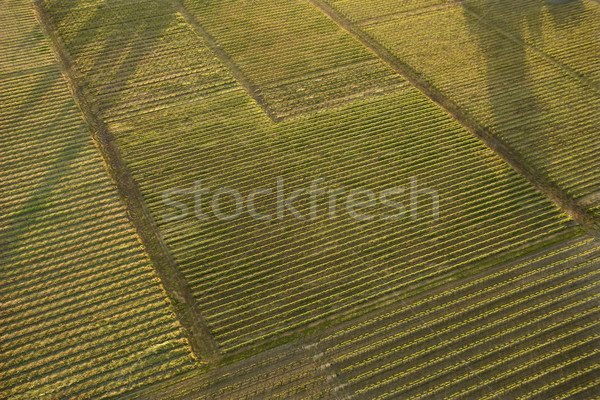 Aerial of crops. Stock photo © iofoto