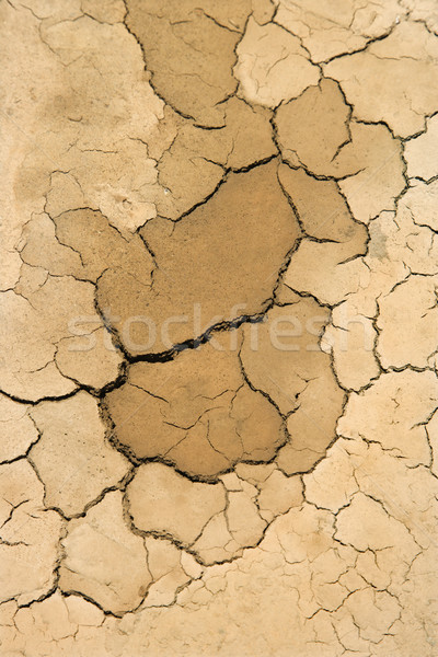 Dried up cracked dirt. Stock photo © iofoto