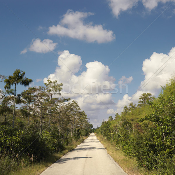 Florida Everglades road. Stock photo © iofoto