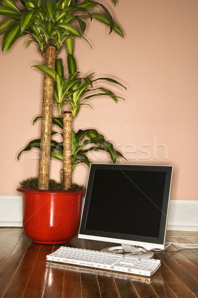 Computer with houseplant. Stock photo © iofoto