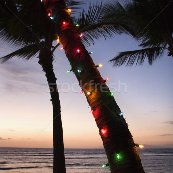 Színes fények pálmafa ünnepi körül tengerpart Stock fotó © iofoto