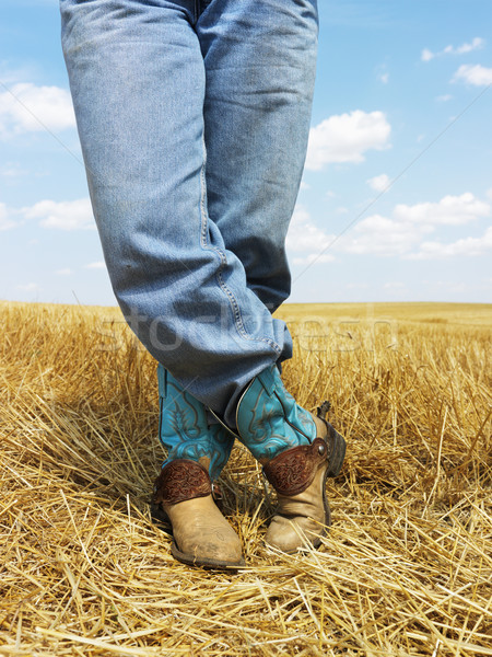 Cowboy standing in field. Stock photo © iofoto