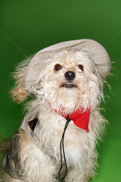 Stock foto: Fluffy · Hund · Safari · grünen · Porträt