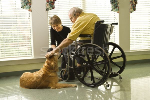 Man in wheelchair with dog. Stock photo © iofoto