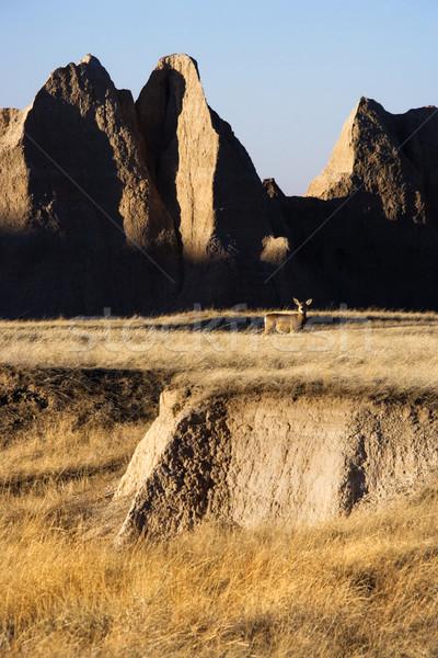 Güney Dakota manzara park doğa seyahat geyik Stok fotoğraf © iofoto