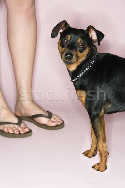 Woman with dog. Stock photo © iofoto