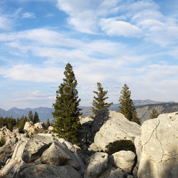 Wyoming dağ manzara büyük yaprak dökmeyen ağaçlar Stok fotoğraf © iofoto