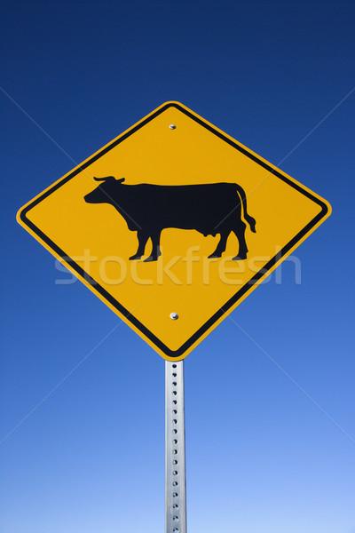 Gado placa sinalizadora amarelo ver estrada vertical Foto stock © iofoto