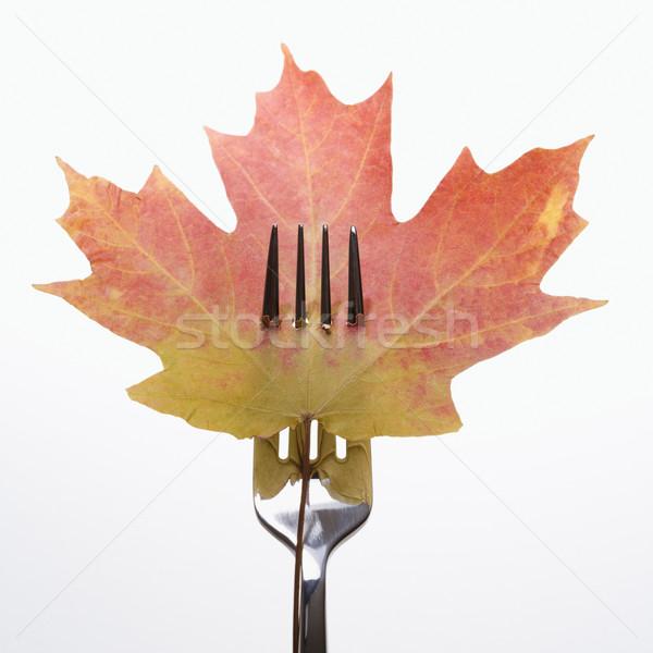 Pierced maple leaf. Stock photo © iofoto