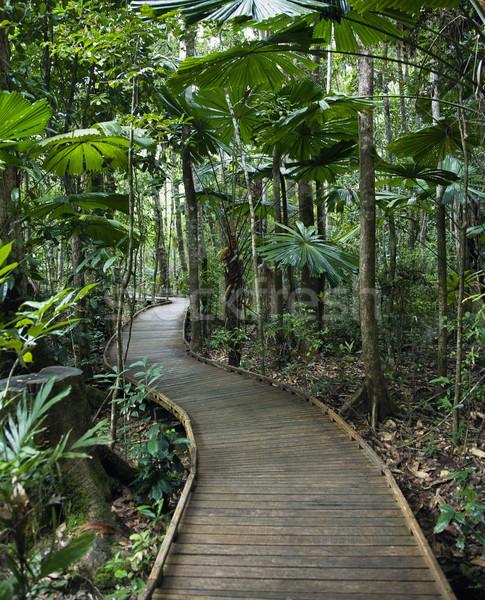 Rainforest lasu Australia drzewo charakter Zdjęcia stock © iofoto