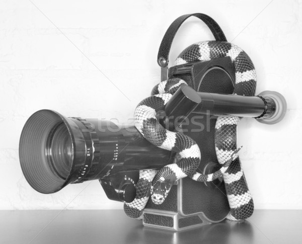 California Kingsnake on movie camera. Stock photo © iofoto