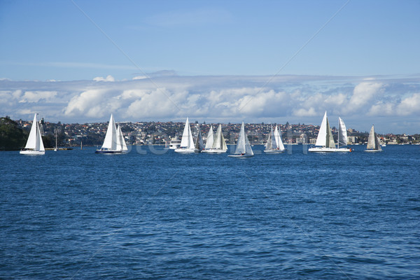 Zeilboten Sydney Australië water stad landschap Stockfoto © iofoto