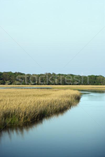 Marsh coastal landscape. Stock photo © iofoto