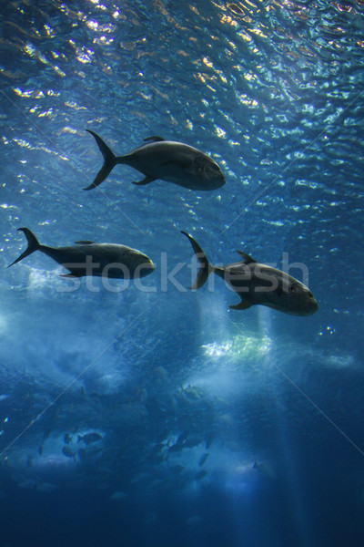Foto stock: Três · peixe · natação · aquário · Lisboa · Espanha