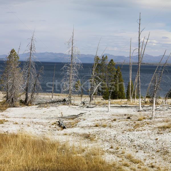 Parque Wyoming estéril agua naturaleza árboles Foto stock © iofoto