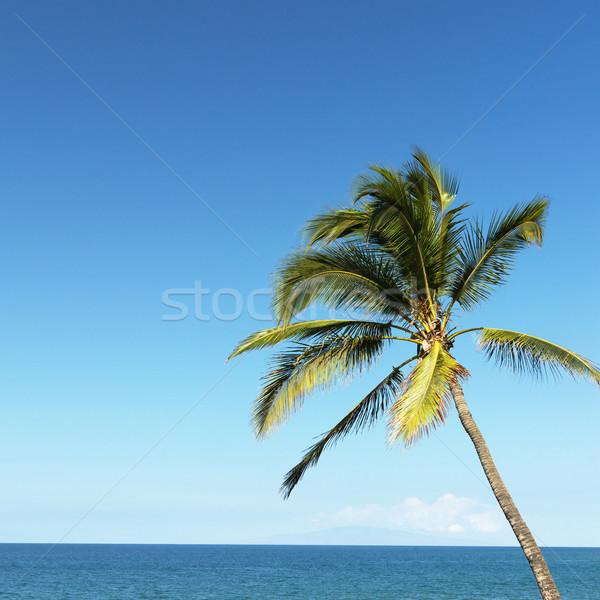 Pálmafa óceán fúj szellő kilátás víz Stock fotó © iofoto
