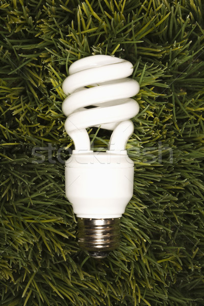 Energy saving light bulb. Stock photo © iofoto