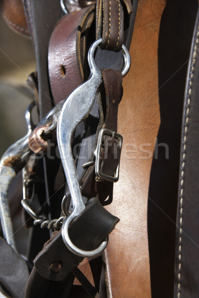 Detail of Horse Bridle Stock photo © iofoto