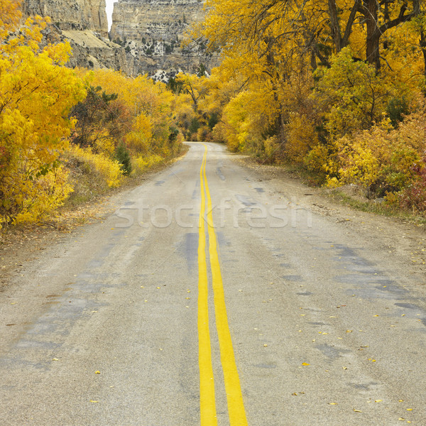 Road with Aspen trees. Stock photo © iofoto