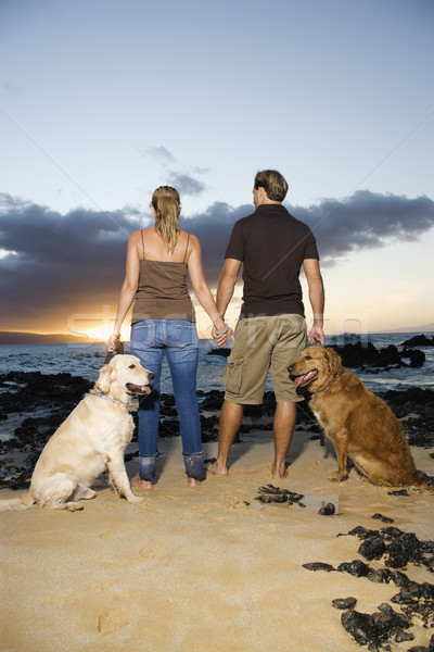 Couple Holding hands and Walking Dogs on the Beach Stock photo © iofoto