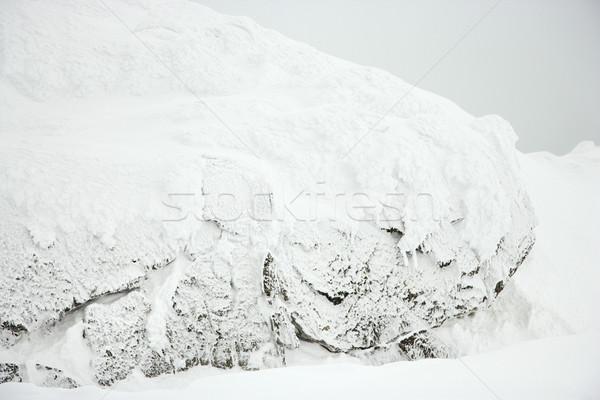 Snow covered scene. Stock photo © iofoto