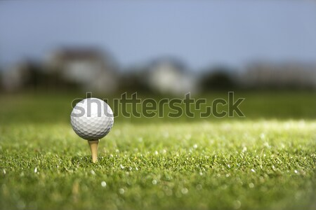 Golf ball on tee. Stock photo © iofoto