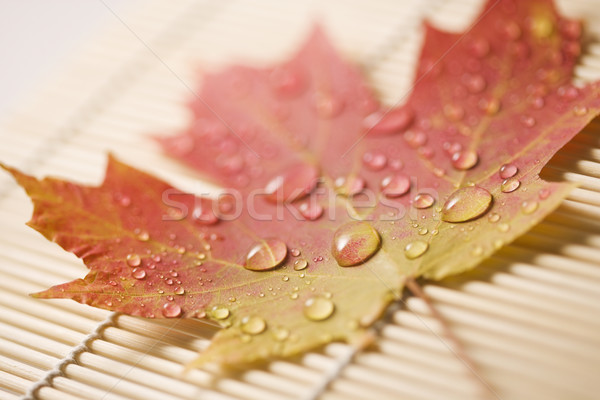 Maple leaf on bamboo mat. Stock photo © iofoto